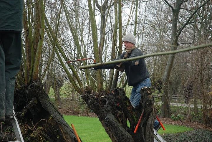 Duurzaam bosbeheer – hakhout en knotbomen