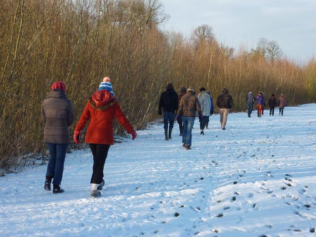 Wilde wilgen wandeling: hakhout en biomassa