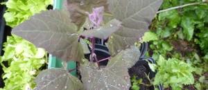Regendruppels op blaadjes en rupsen